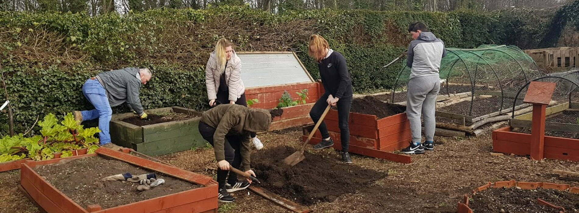 Young people digging in an allotment